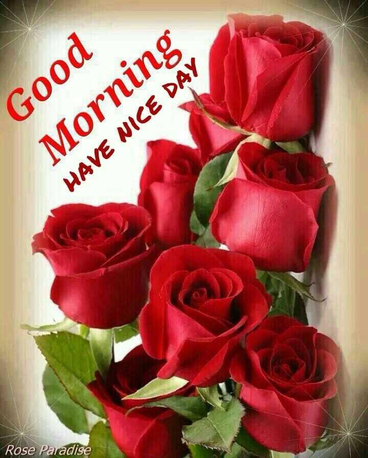 good morning - Good Morning HAVE NICE DAY Rose Paradise - ShareChat