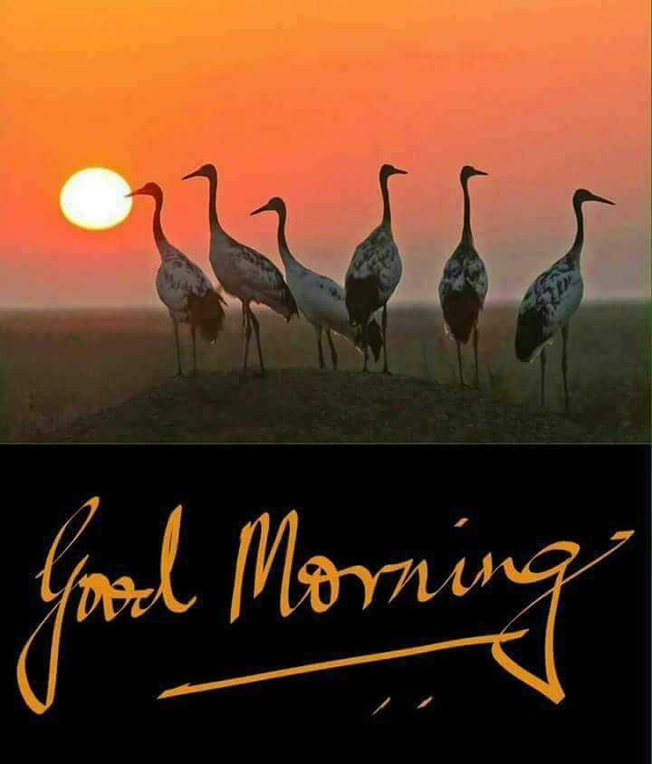 🌹😁good morning😁🌹 - Good Morning - ShareChat