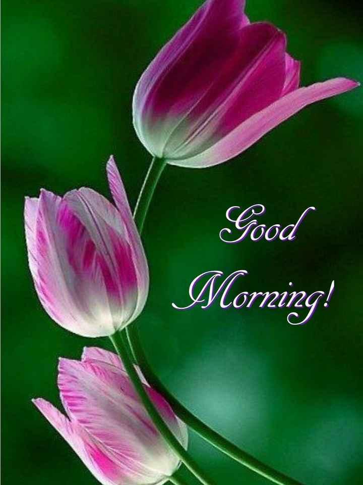 #good morning - Good Morning ! - ShareChat
