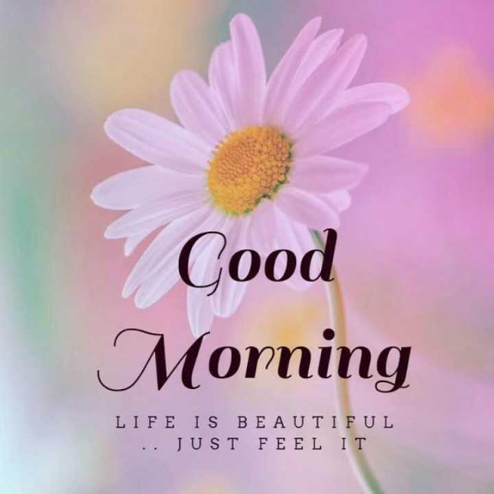 🌸💐🌸 good morning🌸💐🌸 - Cood Morning LIFE IS BEAUTIFUL . . JUST FEEL IT - ShareChat