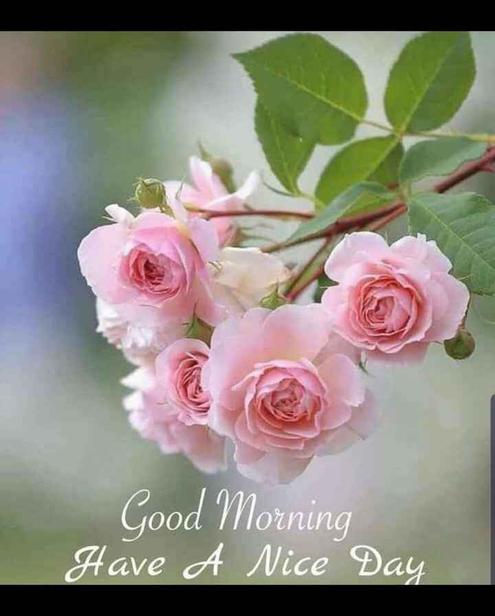 💟good morning 💟 - Good Morning Have A Nice Day - ShareChat