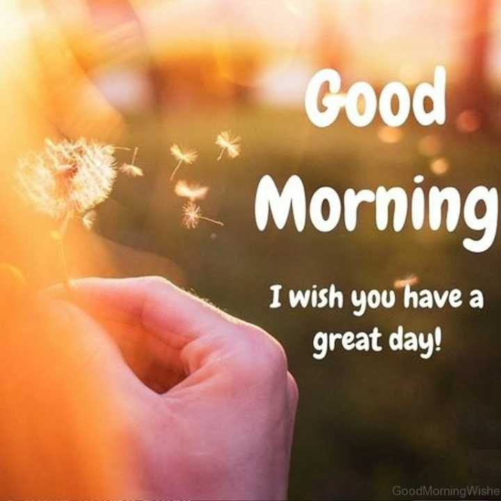 goodmorning - Good Morning I wish you have a great day ! Good Morning Wishe - ShareChat