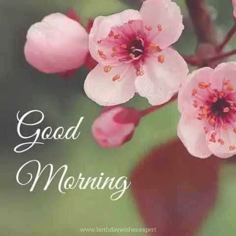 goodmorning - Good Morning www . birthday wishes expert - ShareChat