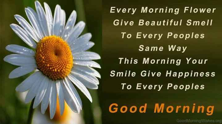 🙏good morning 🙏# - Every Morning Flower Give Beautiful Smell To Every Peoples Same Way This Morning Your Smile Give Happiness To Every Peoples Good Morning Good Morning Wishes org - ShareChat