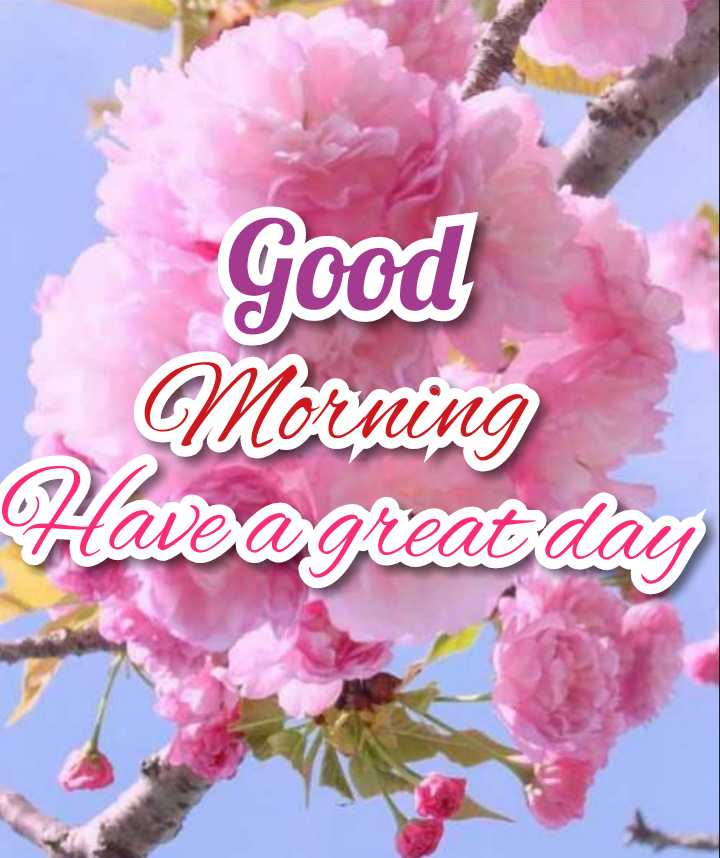 good morning - Good Morning Have a great day - ShareChat