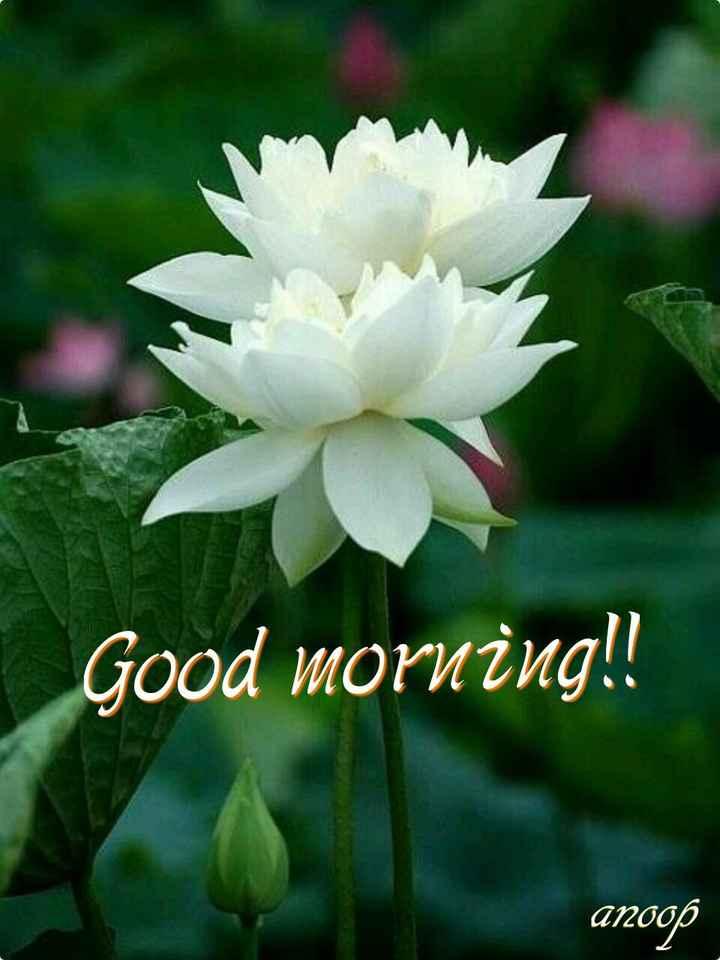 😊💐good morning 😊💝 - Good morning ! ! агоор - ShareChat