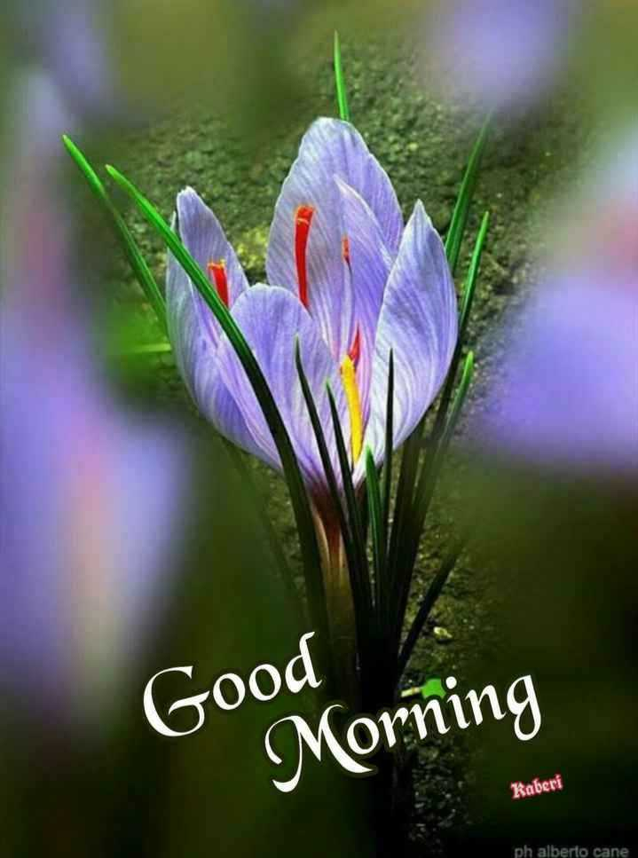good morning # - Good Morning Kaberi ph alberto cane - ShareChat