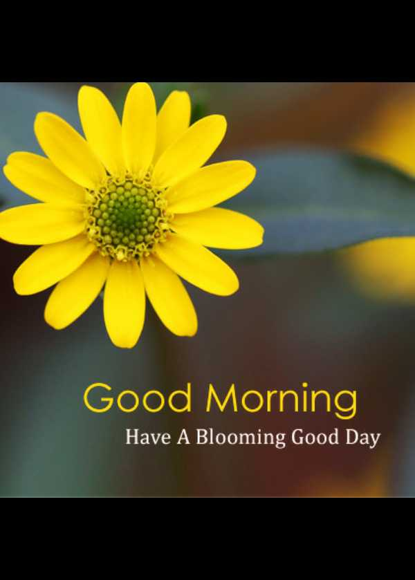 🌷🌷good morning🌷🌷 - Good Morning Have A Blooming Good Day - ShareChat