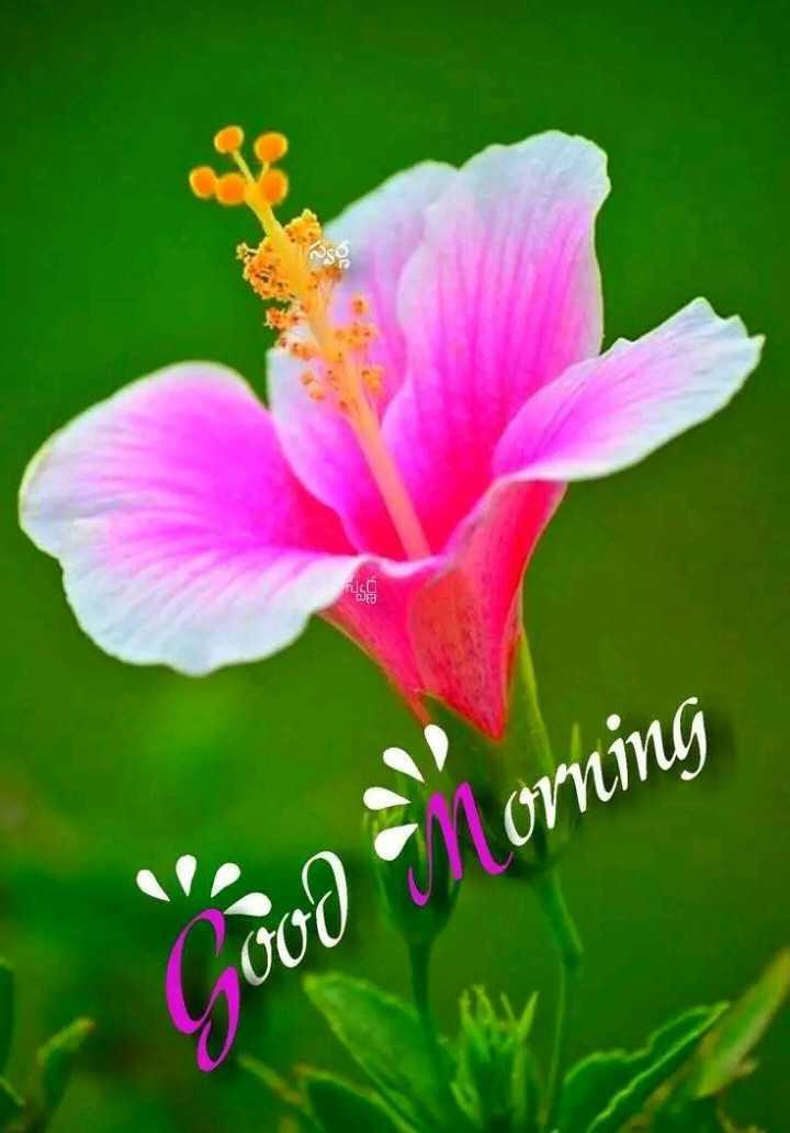 🌹☕good morning 😄 - - Coco • Morning - ShareChat