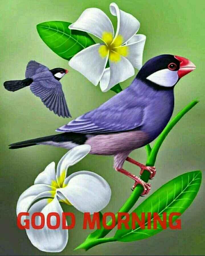 good morning - GOOD MORE - ShareChat