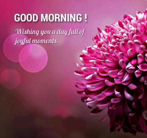 good morning - GOOD MORNING ! Wishing you a day full of joyful moments . - ShareChat