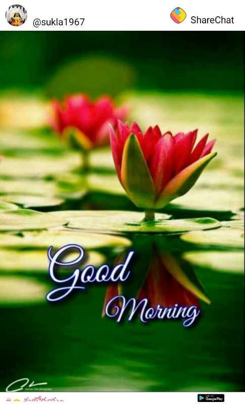 good morning 🌷 - @ @ sukla1967 @ sukla 1967 ShareChat Good Morning # ke SB - ShareChat