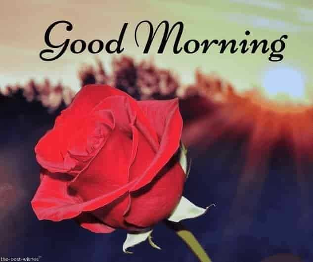 💐🌻good morning🌻💐 - Good Morning the best wishes - ShareChat