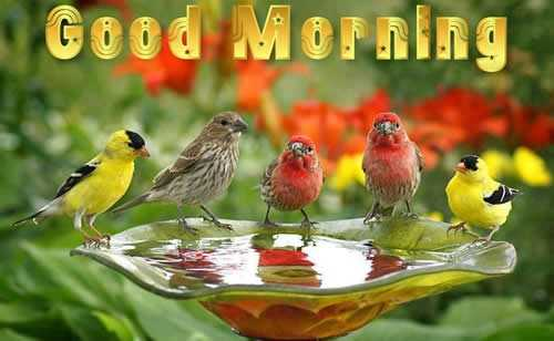 ## good morning  ## - Good Morning - ShareChat