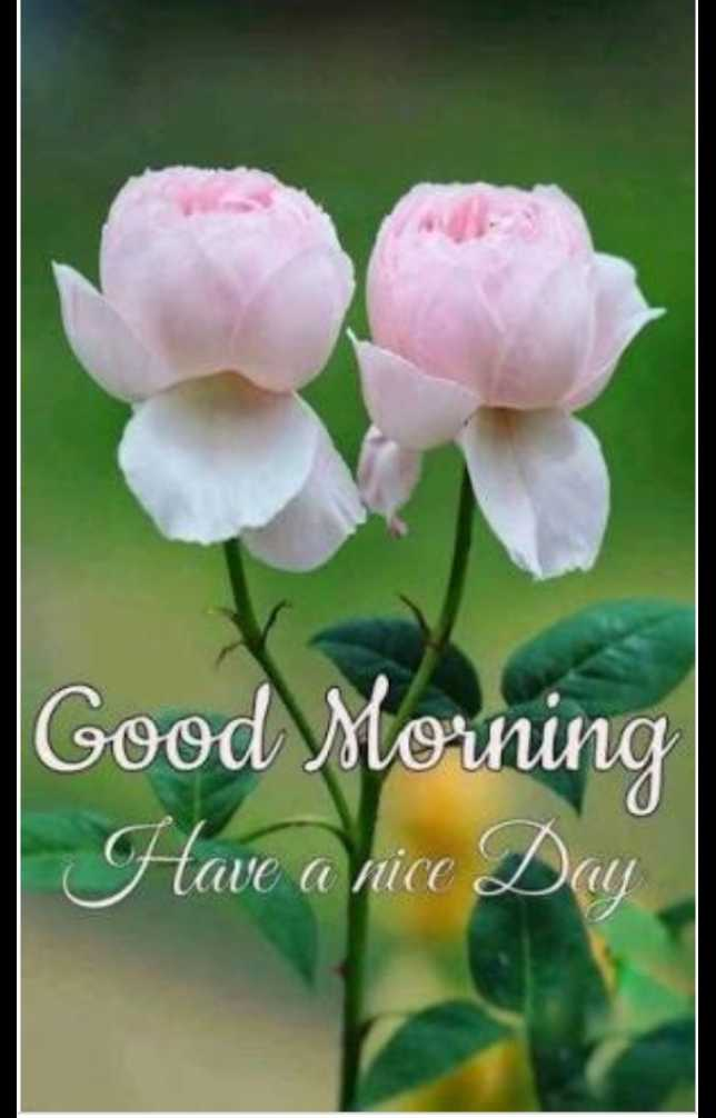 good morning - Good Morning Have a nice Day - ShareChat