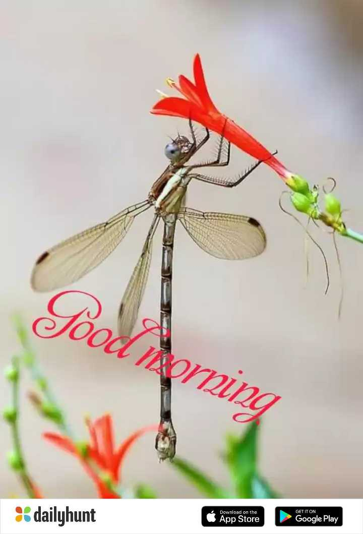 🌸💐🌸 good morning🌸💐🌸 - Jood Arning GET IT ON * dailyhunt Download on the App Store Google Play - ShareChat