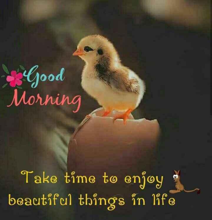 🌷good morning🌷 - Good Morning Take time to enjoy beautiful things in life - ShareChat
