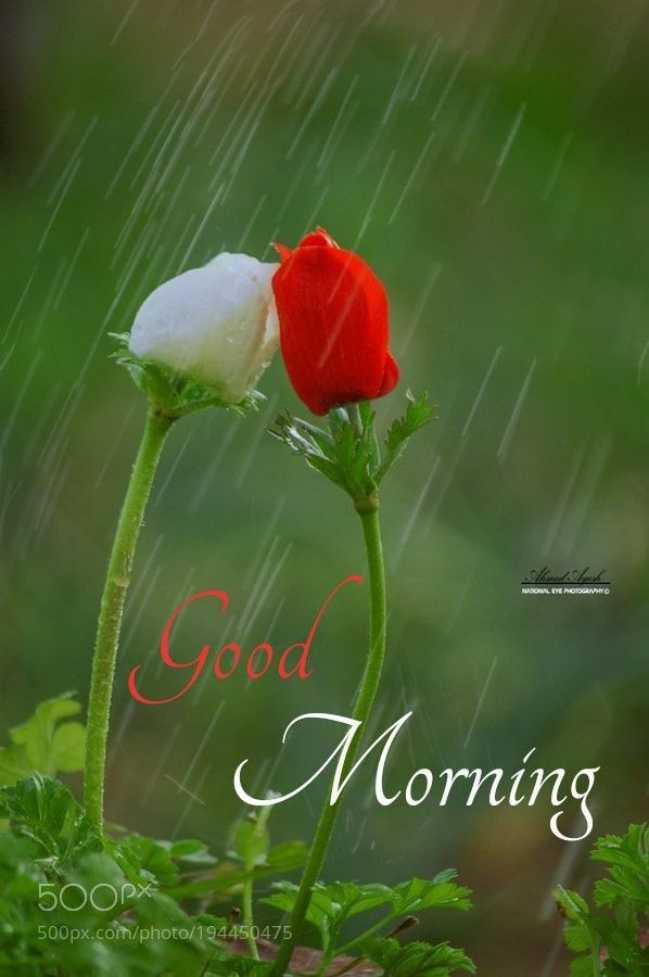 😊💐good morning 😊💝 - ARROLY MORGAN Good Morning 500px 500px . com / photo / 194450475 - ShareChat
