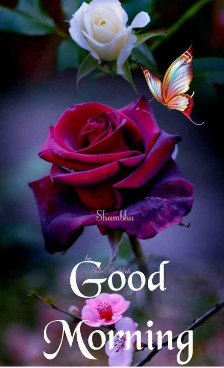 🙏good morning 🙏# - hambhu Good Morning - ShareChat