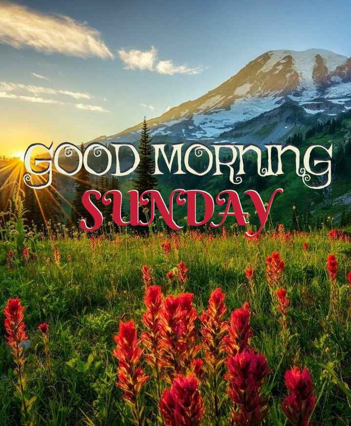 😊💐good morning 😊💝 - TA GOOD MORNING A SUNDAY - ShareChat