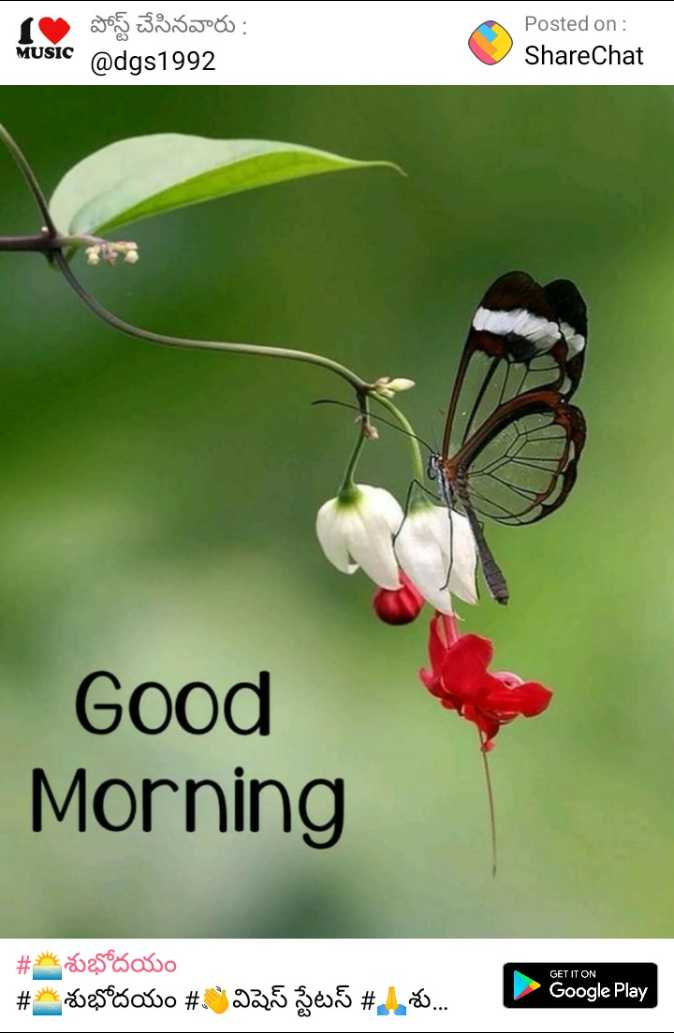 🍃good morning🍃 - 1 పోస్ట్ చేసినవారు : MUSIC @ dgs1992 Posted on : ShareChat Good Morning GET IT ON # శుభోదయం # శుభోదయం # : విషెస్ స్టేటస్ # , శు . . . - Google Play - ShareChat