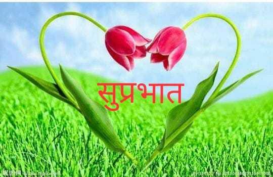 good morning 💖💞 - सुप्रभात CAL SCgSamajshra - ShareChat