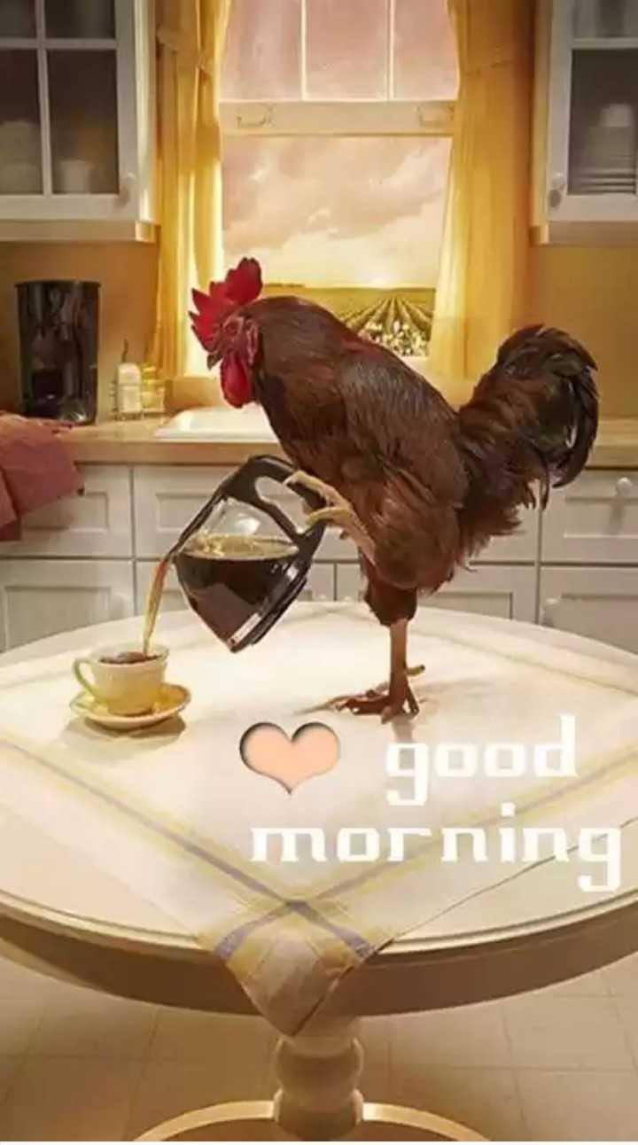 good morning boyes g girls i don no tudu - סחותחסת - ShareChat