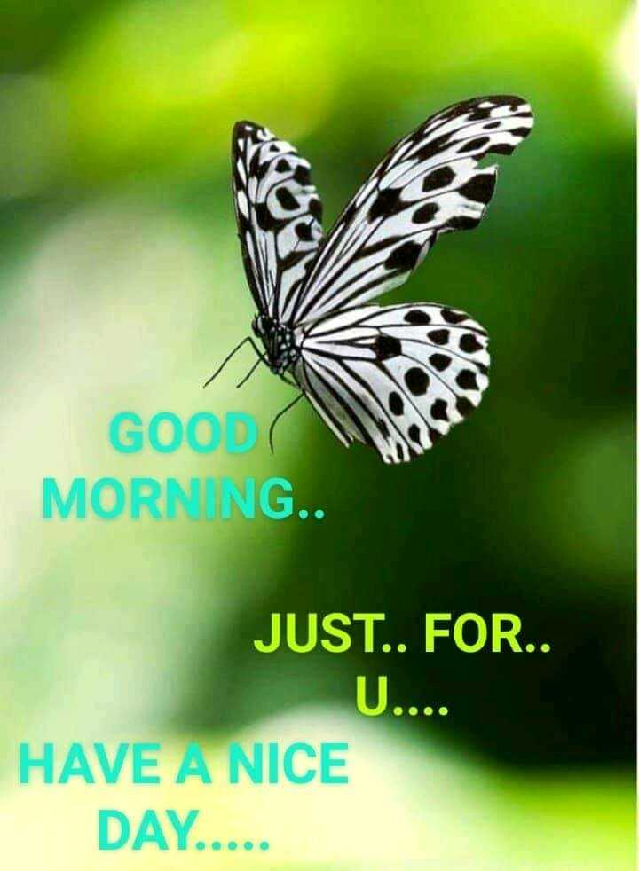good morning boyes g girls i don no tudu - GOOD MORNING . . JUST . . FOR . . U . . . . HAVE A NICE DAY . . . . . - ShareChat