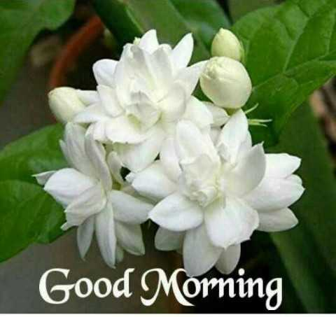 good morning gif - Good Morning - ShareChat