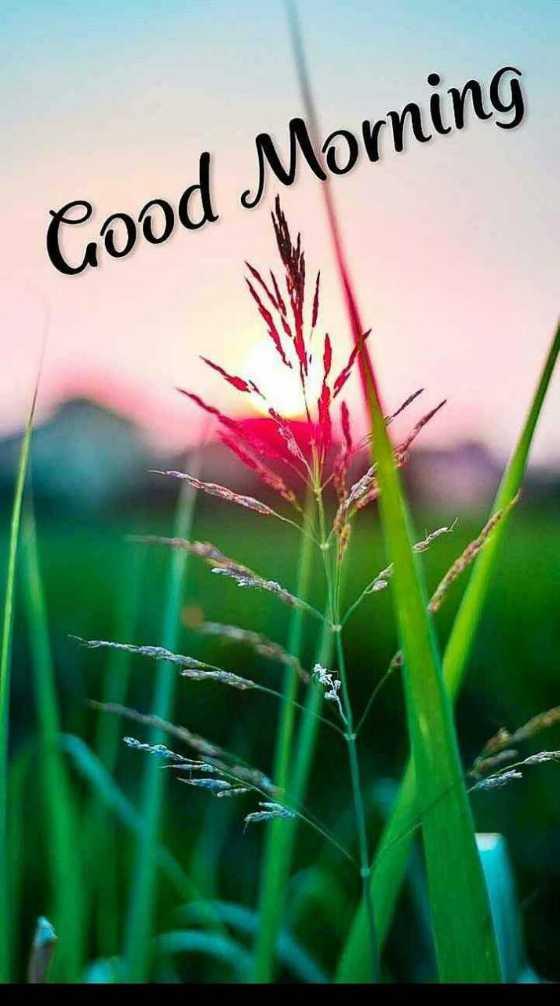 good morning god 🌹🌸🌷🌼🌻 - Good Morning - ShareChat