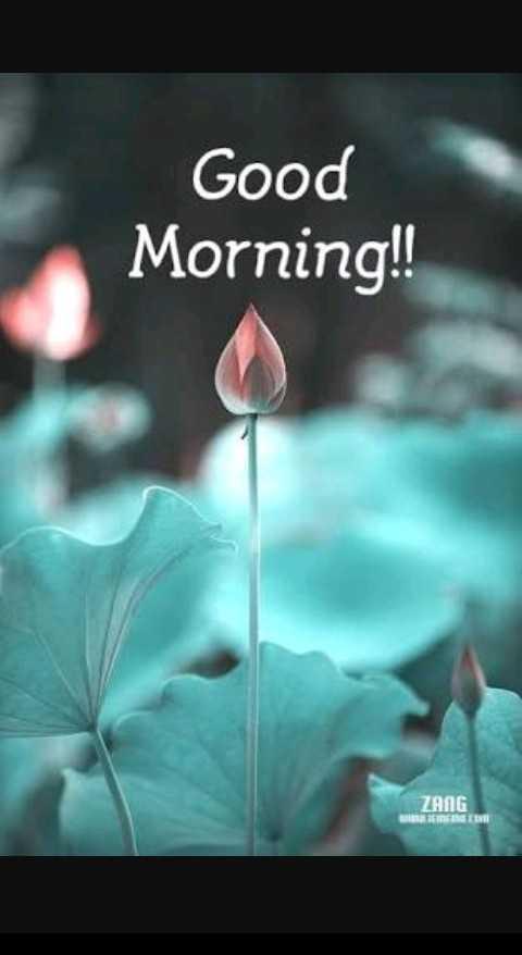 good morning #🌹good morning - Good Morning ! ! ZANG - ShareChat