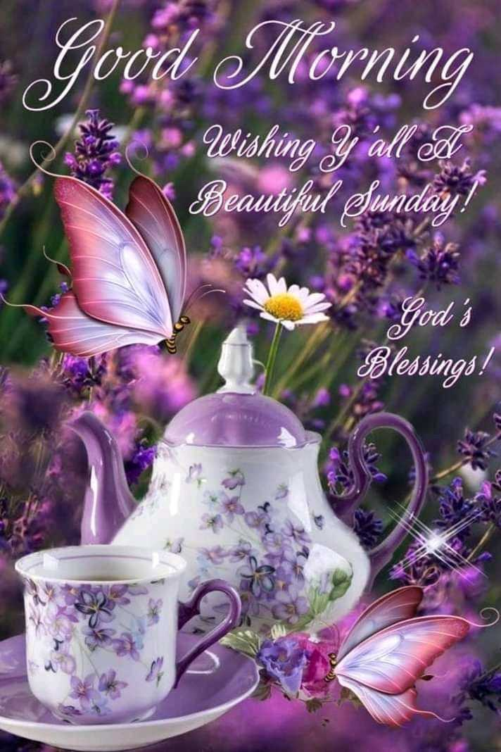 💥good morning jokes💥 - Good Morning Wishing y ' all A Beautiful Sunday ! God ' s Blessings ! - ShareChat