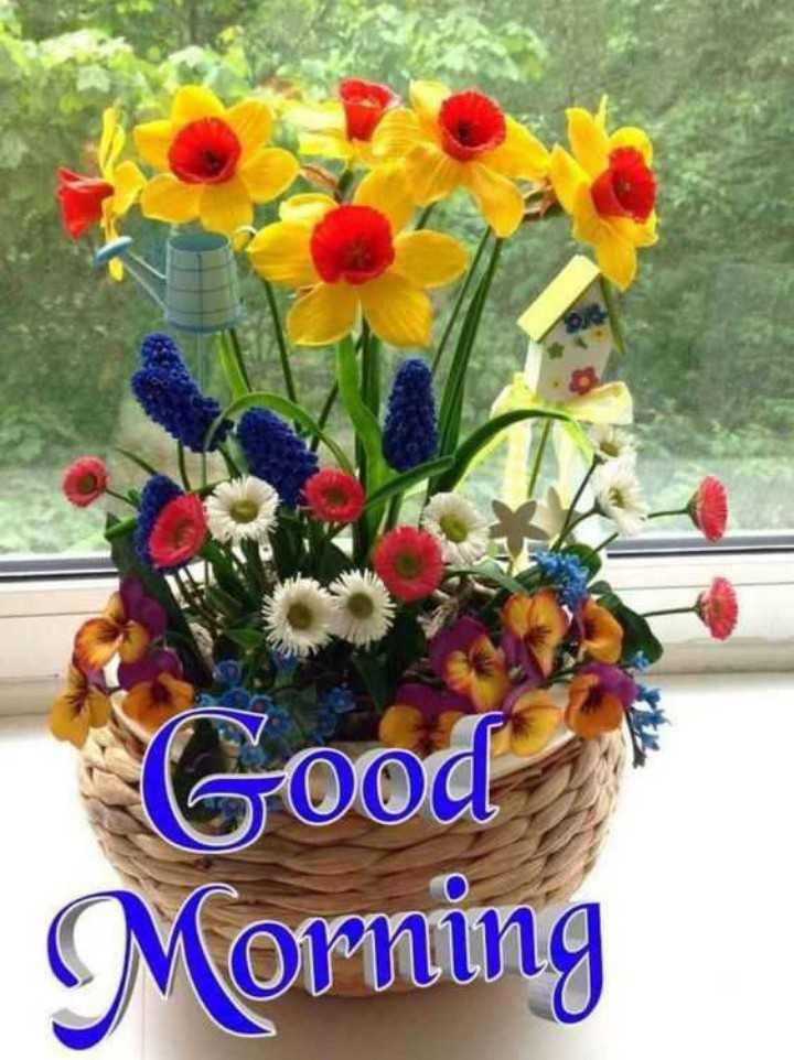 good morning my friends - Good Morning - ShareChat