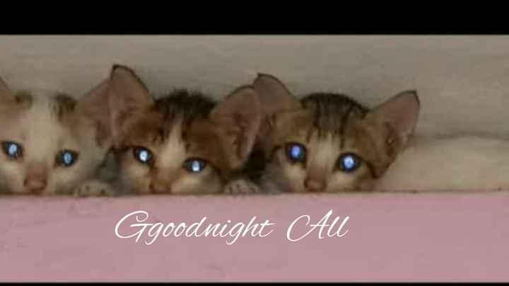 goodnight 💘❤💘❤💘❤💘❤ - ShareChat