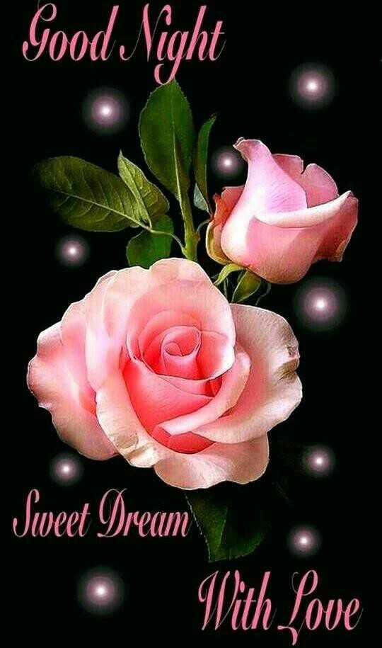 good night 🍹 - Good Night Sweet Dream With Love - ShareChat