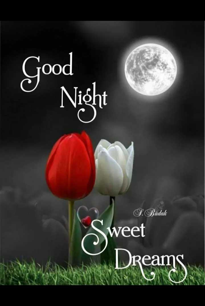 good night 😘😘😴😴 - y Night Good S . Budak weet Dreams - ShareChat