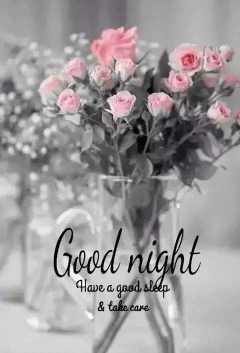 good night - Good night Have a good older & take care - ShareChat