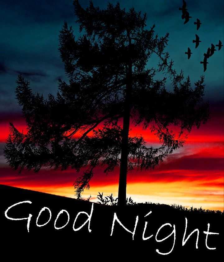 good night 💐 - Como Good Night - ShareChat