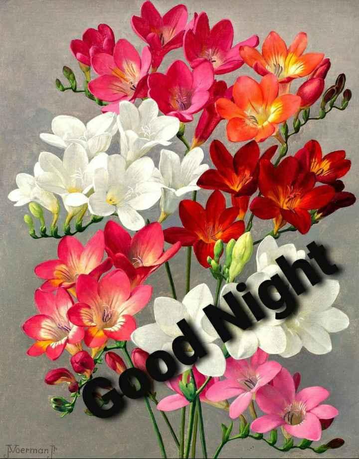 good night 💐 - Voerman - ShareChat
