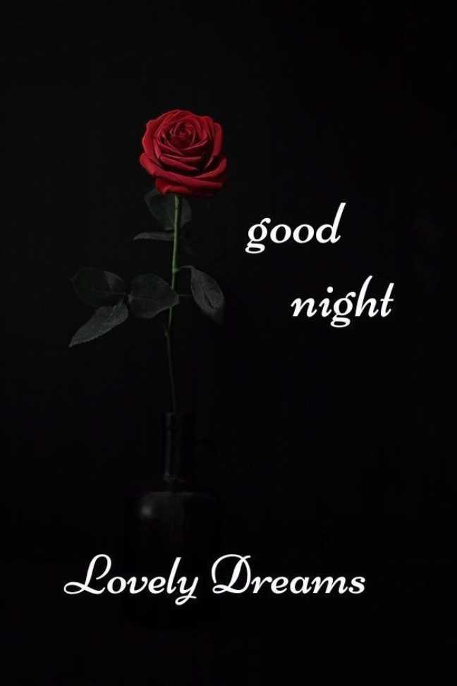💙 good night 💙 - good night Lovely Dreams - ShareChat