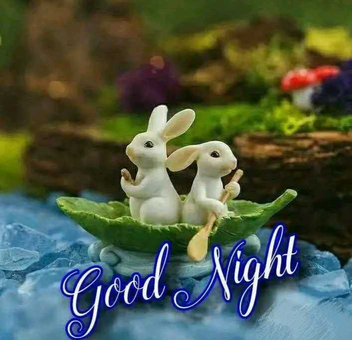 good night😴 - - Good Night - ShareChat