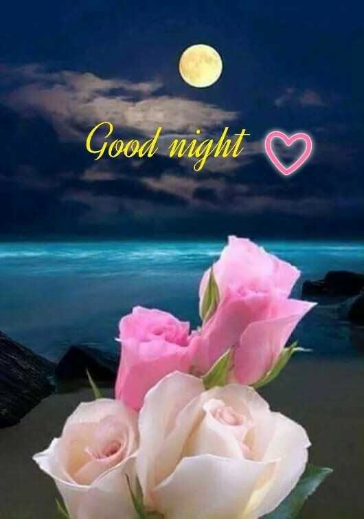 🌙 good night 🌙 - Good night ♡ - ShareChat