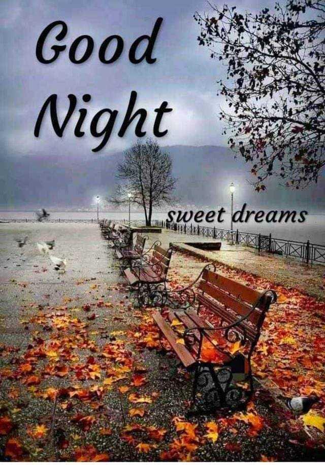 good night 🙀 - Good Night sweet dreams OR - ShareChat