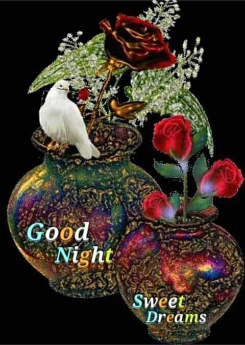 good night - Good Night Sweet Dreams - ShareChat