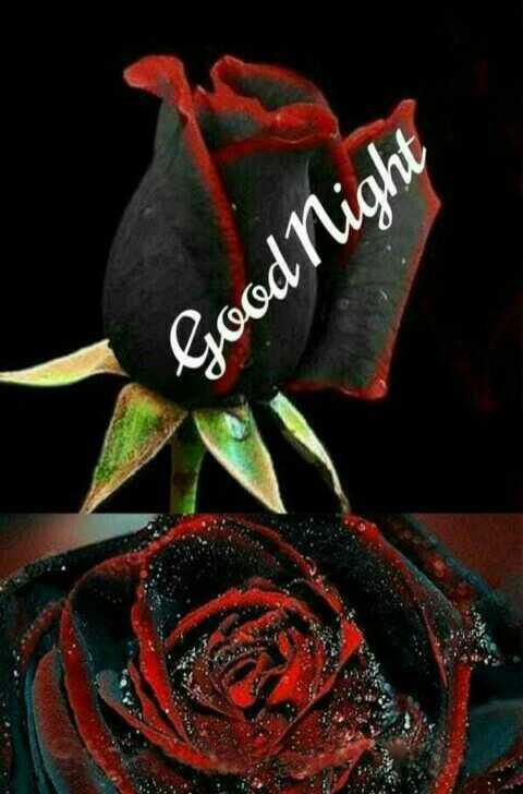 🎶🎵🌓🌓good night🌓 🌓🎵🎶 - Good Night - ShareChat