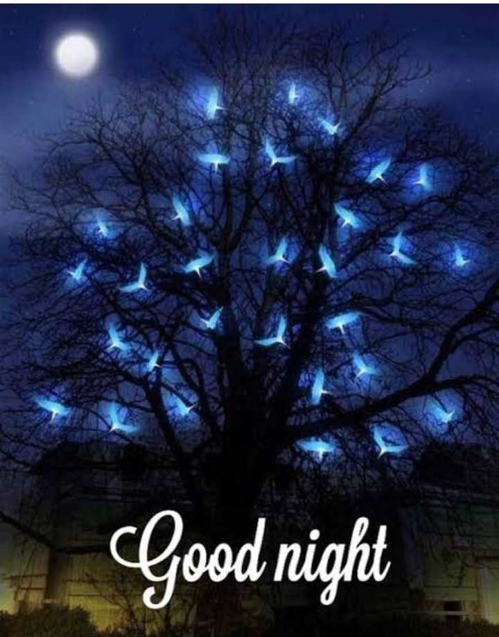 🌹🌹 good night 🌹🌹 - Good night - ShareChat