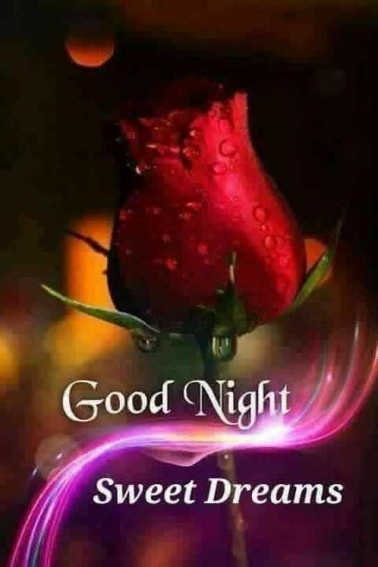 🌹🌹 good night 🌹🌹 - Good Night Sweet Dreams - ShareChat