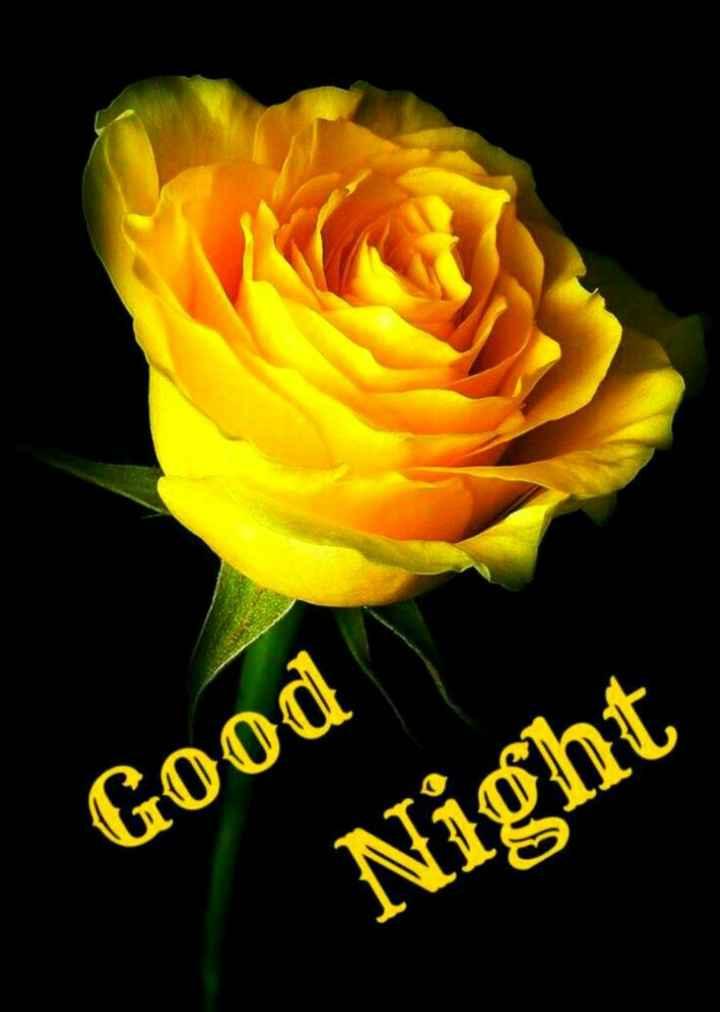 🌹 good night 🌹 - Good Night - ShareChat