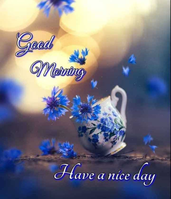 gud morning⛅🌹 - Goed Merning Have a nice day - ShareChat