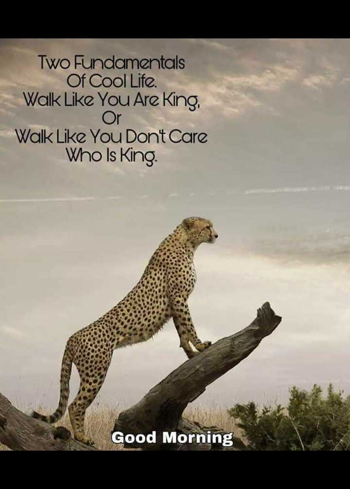 gud mrng 💞💞💞 - Two Fundamentals Of Cool Life . Walk Like You Are King , - Or Walk Like You Dont Care Who Is King Good Morning - ShareChat